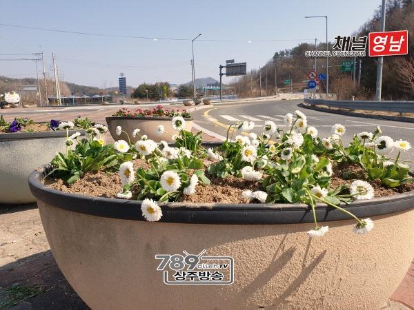 [화서면]봄을 알리는 화사한 꽃모 식재.jpg