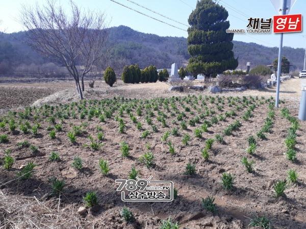 [중동면]도로변 소공원에 봄꽃 심어.jpg