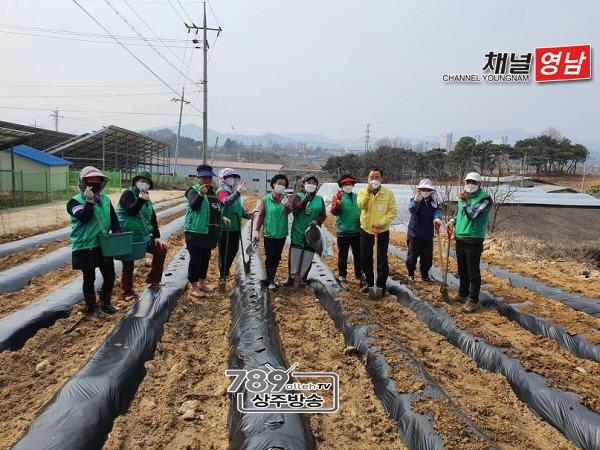 [함창읍]새마을남녀지도자 휴경지 경작사업 실시.jpg