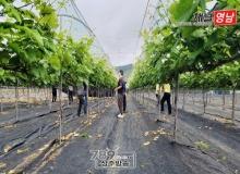 [상주]화동면, 농촌일손돕기로 영농 농가에 힘 보태