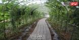 [상주]상주남부초 생태자연환경 덩굴식물터널